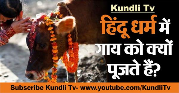 why do the cow worship is important hinduism