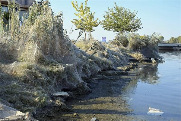 a greek town infested with spiders covered in giant webs