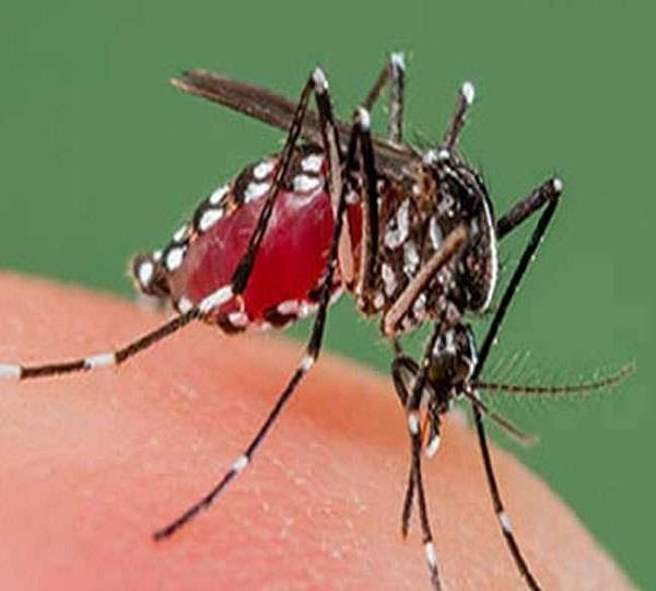 no control on dengue in the organelles