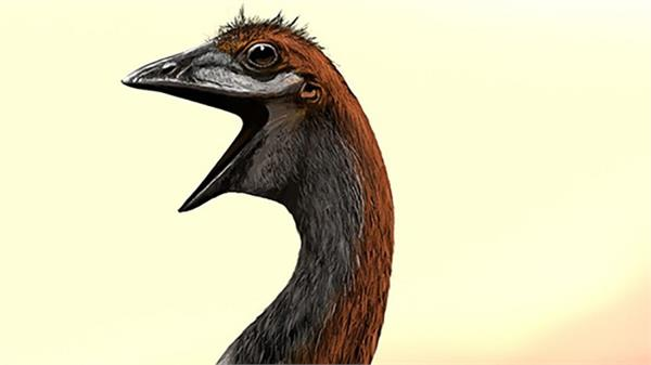 ending decades of doubt biggest bird dispute put to nest
