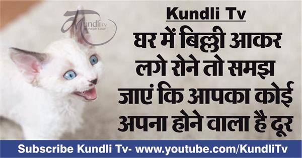 relationship of cat and vastu