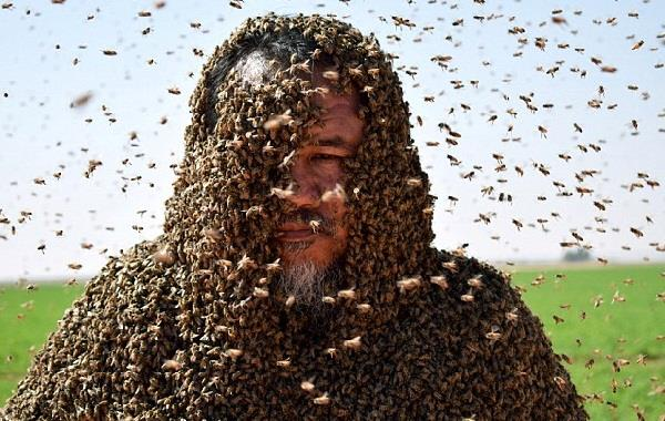 a saudi man with his body covered with bees poses for a picture