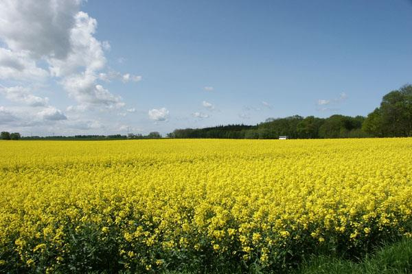govt may announce rs 10 000 cr scheme to ensure msp to oilseeds growers