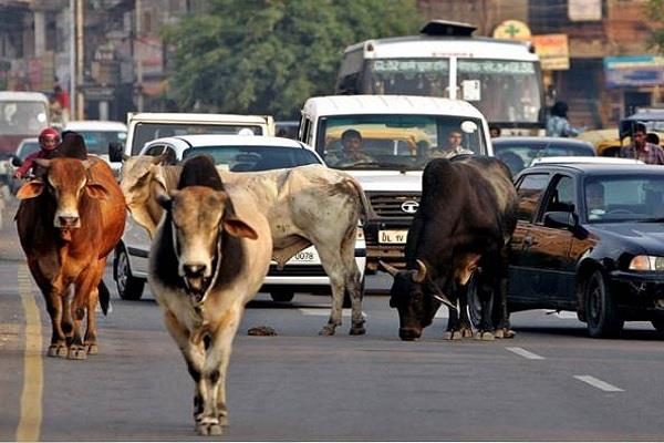 now the aadhaar card will also be made of stray animals