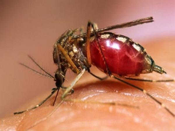 do not stay in the market say dengue