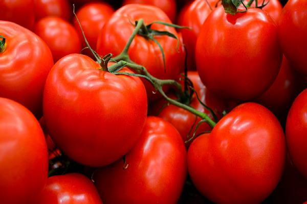 farmers suffer due to falling prices of tomatoes