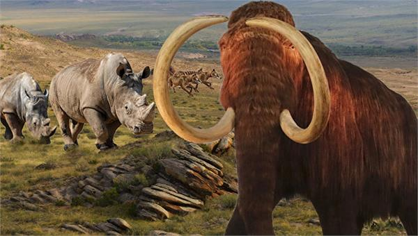 russian scientists are planning to clone woolly mammoth