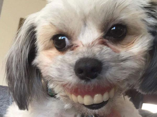 the dog will steal the old master s teeth you will also see the picture