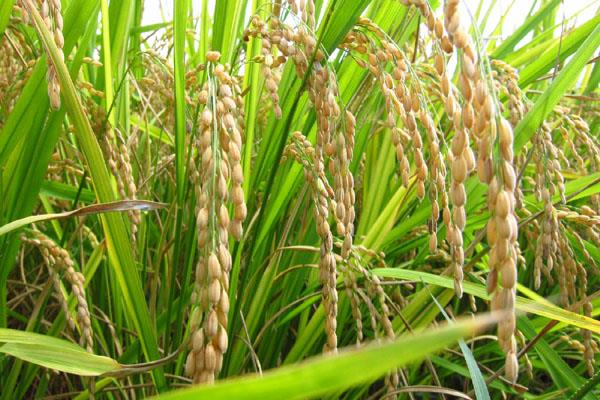 relief for farmers cabinet increased 14 crops msp including paddy
