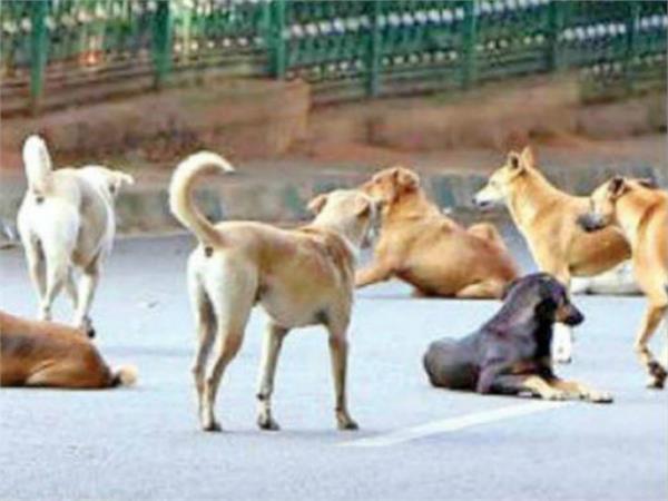 dog attack in hoshangabaad