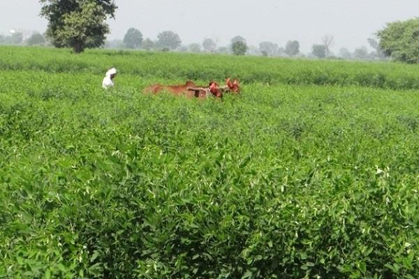 taking only the zero budget farming as a crop bonus