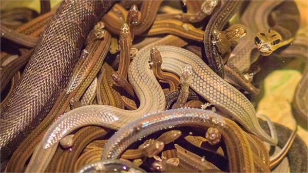20 live snakes found in passenger handbags at airport
