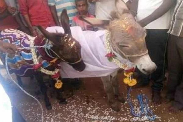 donkey marriege in karnataka