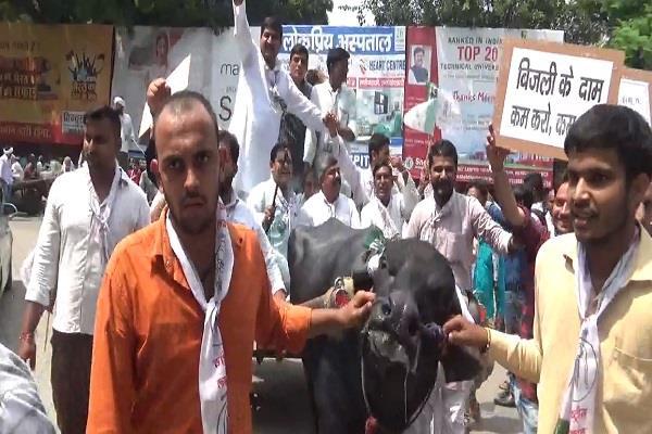 congressmen blow modi s effigy ralod protested on the buffalo buggy