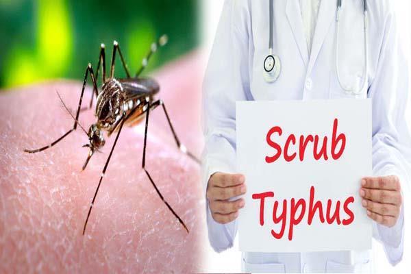 19 cases of dengue and 5 cases of scrub typhus positive in mandi