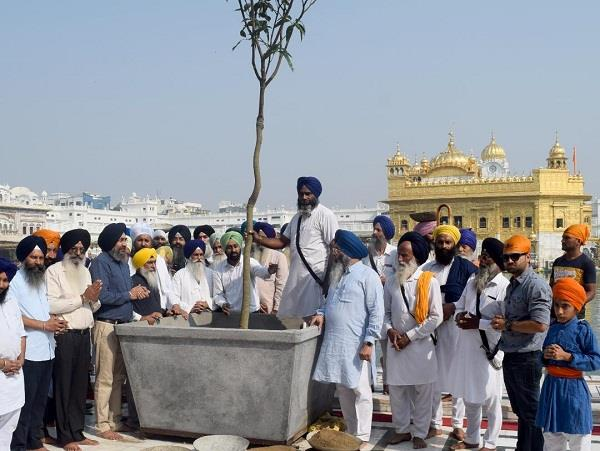 mango plants planted in sri harimandir sahib