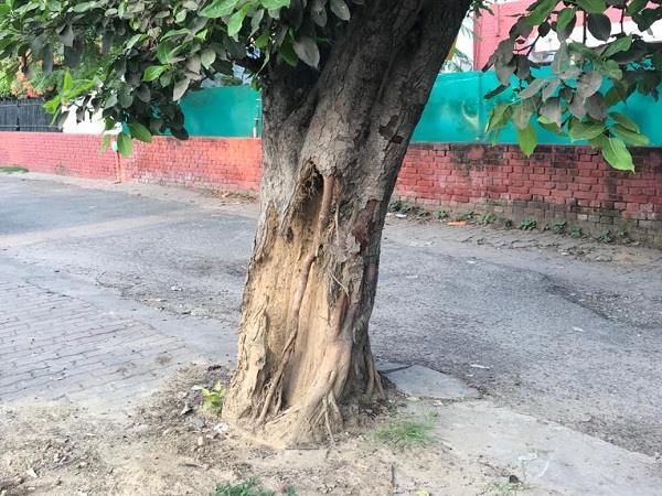 termites to plants outside the gymkhana club