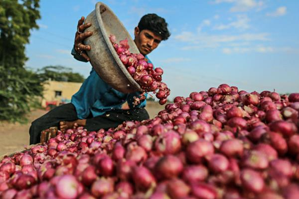 farmers stopped auction of onion in view of fall in prices