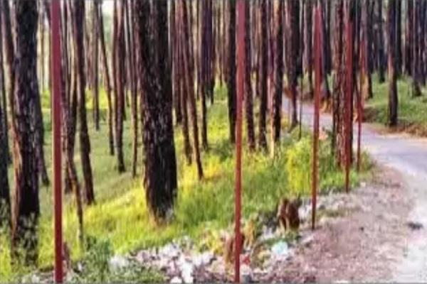 garbage will have to be dumped heavily in maranda forests ngt orders this