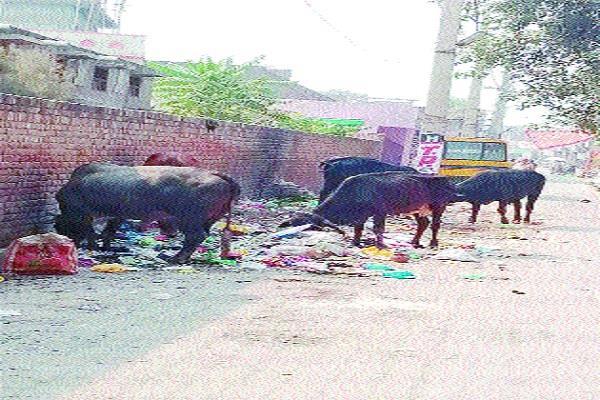 students are disturbed dirt near school gathering animals