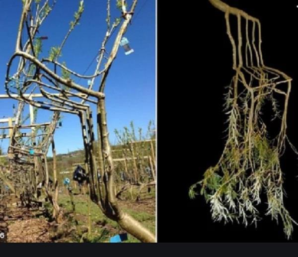 uk couple grows furniture on farm trains trees to grow