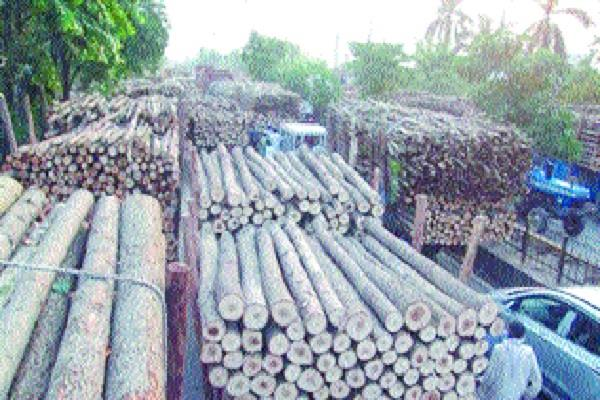 plywood industry in the grip of recession lakad mandi closed