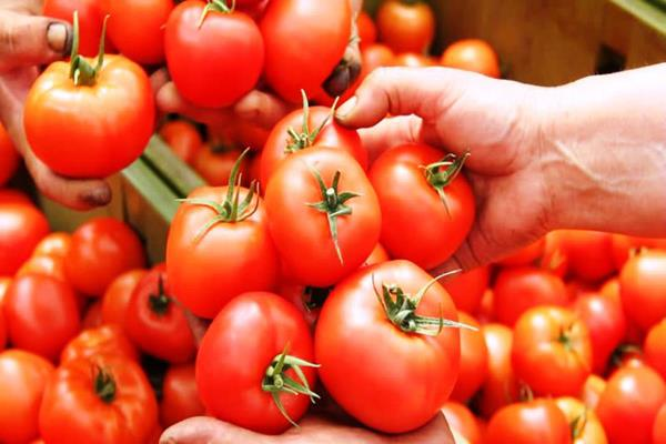 tomato becomes costlier after onion prices rise by one and a half
