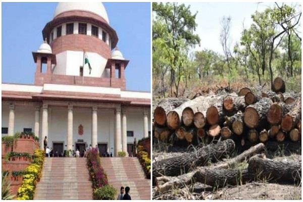 the country welcomed the court s decision on cutting trees in aarey