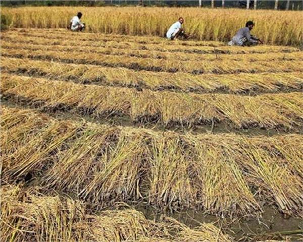farmers reach small secretariat for stubble problem