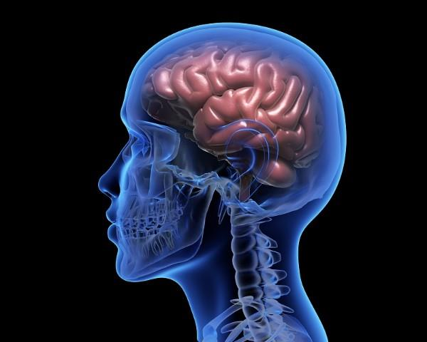 indian human brain is small in size study