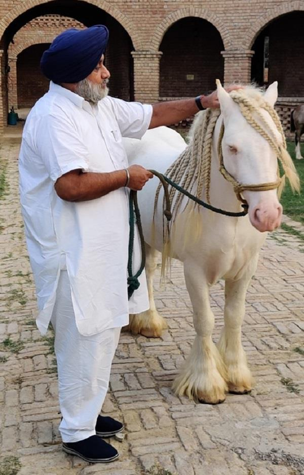 sukhbir badal shares a picture with his horse on world animal day
