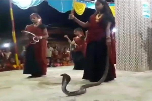 junagarh girls performed garba holding cobra