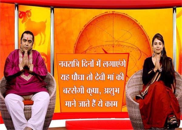 नवरात्रि दिनों में लगाएंगे यह पौधा तो देवी मां की बरसेगी कृपा, ये काम भी होते हैं शुभ