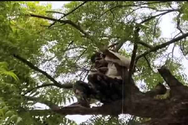 person climbing tree in front of police post accused of assault