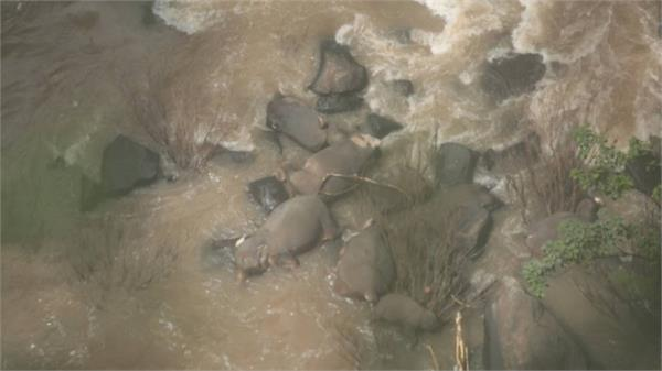 6 elephants drown in thai national park