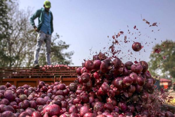 india s decision to ban onion exports doubles onion prices in bangladesh