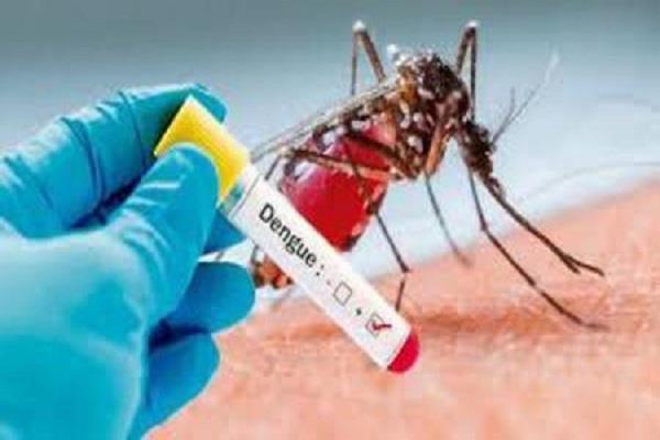 13 cases of dengue larvae found in jalandhar
