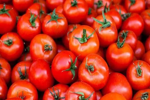 delhi tomato will be given 40 rupees per kg at all the shops of mother dairy