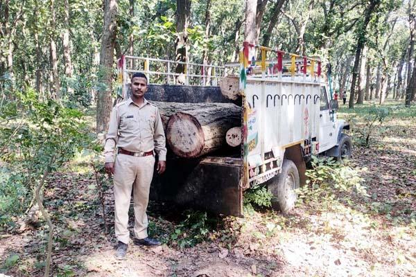 forest department action forest mafia