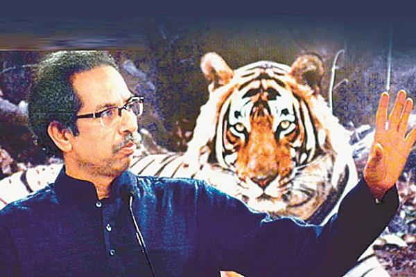 shiv sena tiger ready to roar once again