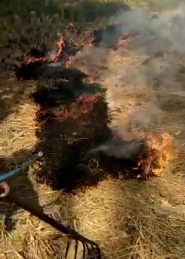 cases have been registered against 179 farmers who burnt stubble in punjab