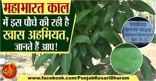 shyalkarni plant in hindi