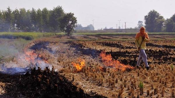 punjab haryana uttar pradesh give financial help to farmers