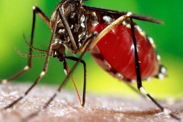 dengue  24 cases 7 days health department s full breath