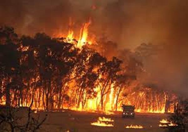 two people died in australian forest fire