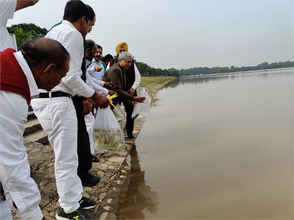 3000 small fish released in sukhna lake