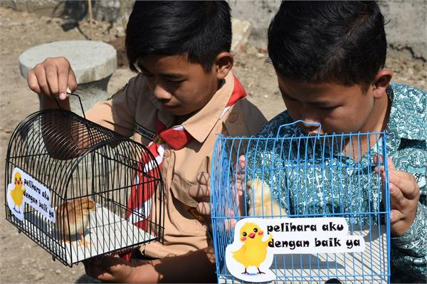 chicks and plants are being distributed to children in indonesia