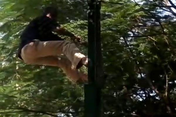man jumped into tiger enclosure to commit suicide