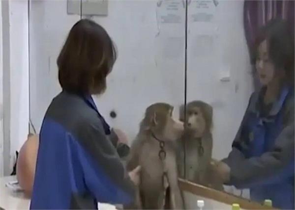 OMG! पासवर्ड ना लगाना पड़ा महंगा बंदर ने की जमकर ऑनलाइन शॉपिंग