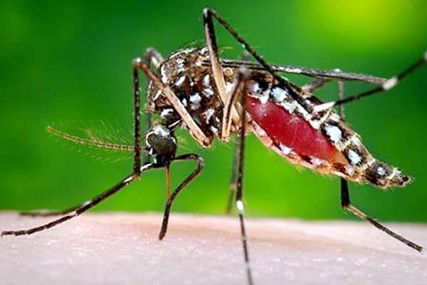 dengue in bathinda
